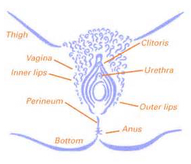 Genital Herpes in Women Symptoms and Treatment